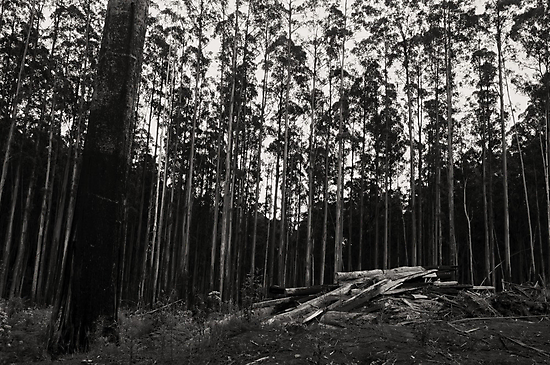 Where wallabies, wombats, and loggers go #3 by athex