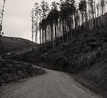 Where wallabies, wombats, and loggers go #1 by athex