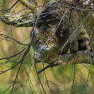 scottish wildcat by Brett Watson Stand By Me  Ethiopia