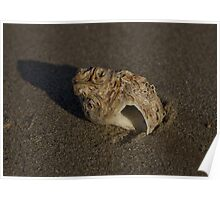 Weathered Whelk on Fahan Beach Poster