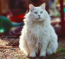 Happy Cat by ibjennyjenny