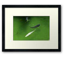 Yin and Yang Koi Fish Framed Print