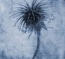 Geum urbanum Cyanotype by John Edwards