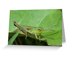 Green on green Greeting Card