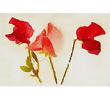Sweet Pea Watercolour Photographic Print