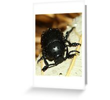 Bloody nose beetle in the rain. Greeting Card