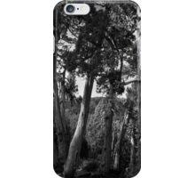 Pencil Pine Grove, Dixon's Kingdom, Tasmania iPhone Case/Skin