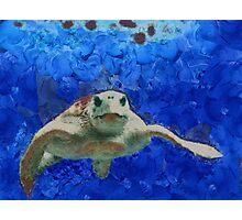 Thursday Island Turtle Photographic Print