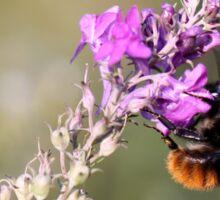 Voracious Bumblebee Sticker