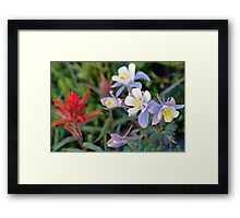 Colorado Blue Columbine Framed Print