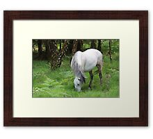 The grey mare Framed Print