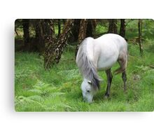 The grey mare Canvas Print
