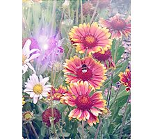 Multi Coloured Flowers with Bee Photographic Print