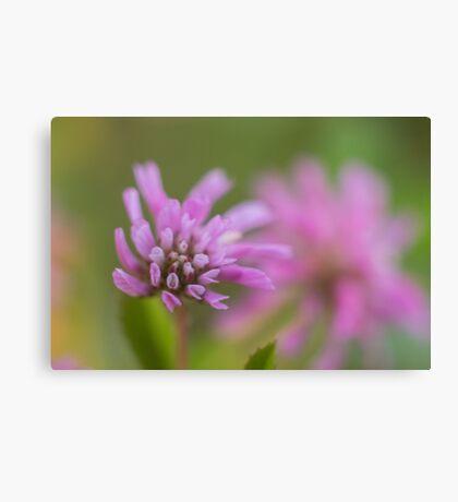 Macro Lilac purple flowers  Canvas Print