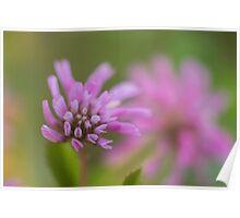 Macro Lilac purple flowers  Poster