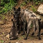 Black Wolf With Pups by WolvesOnly