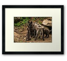 Black Wolf With Pups Framed Print