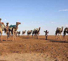 Camel Salt Train by aidan  moran