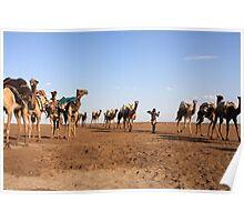 Camel Salt Train Poster