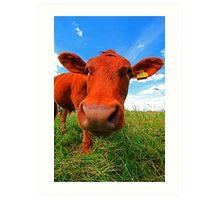 NOSY COW Art Print