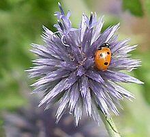 Ladybird Magnet by lynn carter