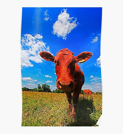 DAISY COW Poster
