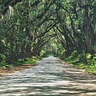 Take a Stroll with me in the Shade of the Live Oak by barnsis