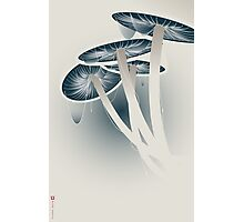 Shrooms Photographic Print