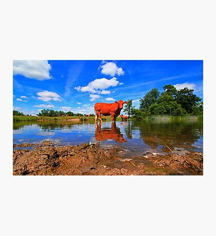 WATER COW Photographic Print