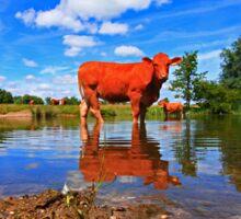 WATER COW Sticker