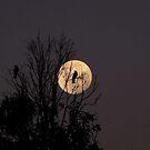 Magpie Moon by Josh Bush