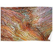 Colorful Bark Texture Poster