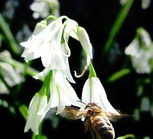Hovering Bee by Josh Bush