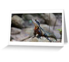 Water dragon, Blue Mountains Greeting Card
