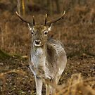 a deer in winter by Brett Watson Stand By Me  Ethiopia