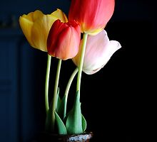 Tulips 2012  by goddarb