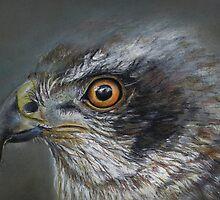 Noble Hawk by Linda Woodward