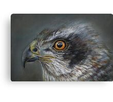 Noble Hawk Canvas Print