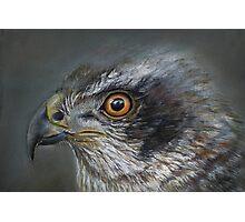 Noble Hawk Photographic Print