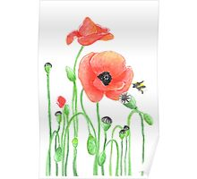 Red poppies and a bumblebee Poster