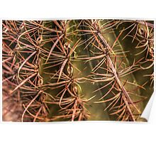 Red Spine Barrel Cactus Detail Poster