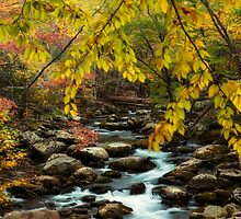 Beautiful Autumn Day at the Stream by KellyHeaton