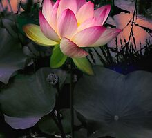 Sunset Lotus by Jessica Jenney