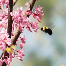 Bee and Flowers by Andrew Brewer