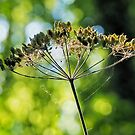 Gone To Seed by Susie Peek