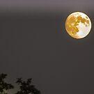 Full Moon by Cee Neuner