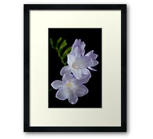 Freesia Framed Print