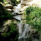 Waterfall Reflections - Maymont Park by ctheworld