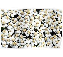 White Little Flowers Poster
