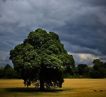 Beneath a stormy sky by missmoneypenny